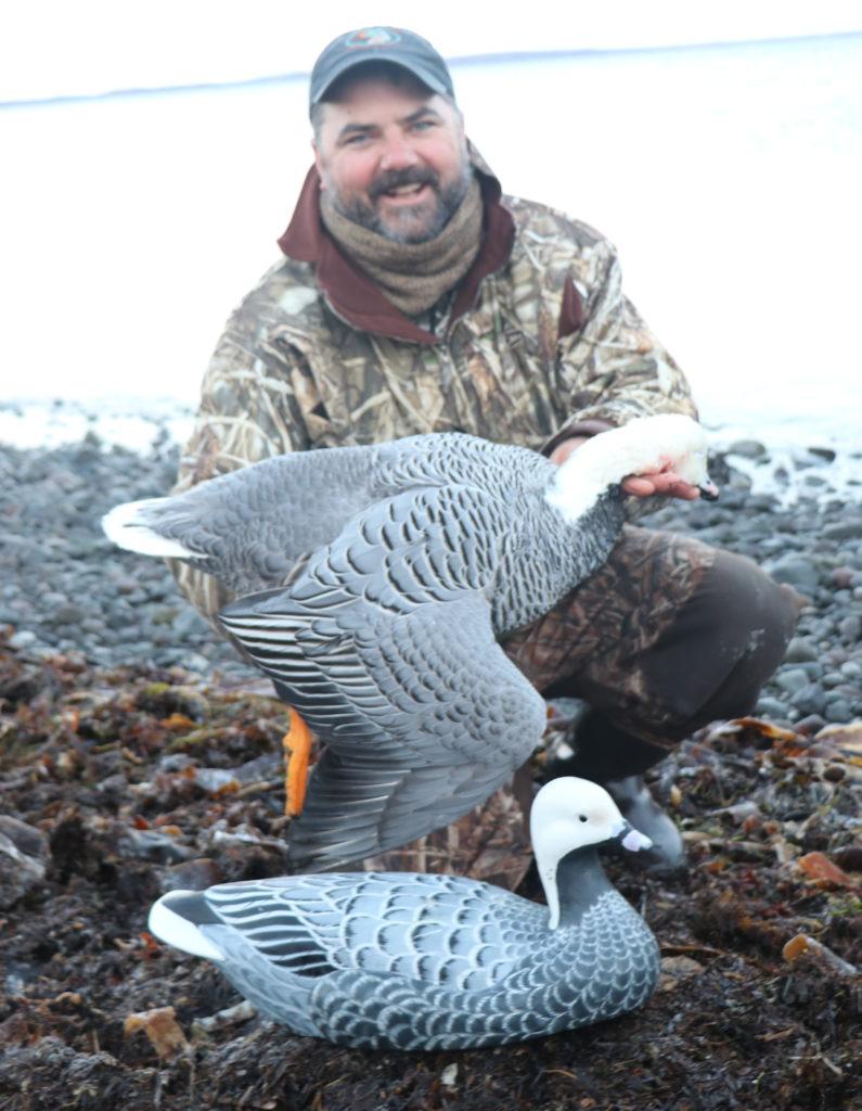 Emperor geese in alaska